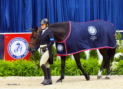 "Virginia Fout and Carma Amateur Owner Hunter 3'3"", Champion 2016 Washington International Photo by Shawn McMillen"