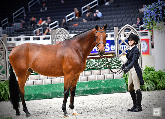 Favorite, owned by Teton Farms, and Karli Postel 2019 Washington International Horse Show Photo by Alden Corrigan Media