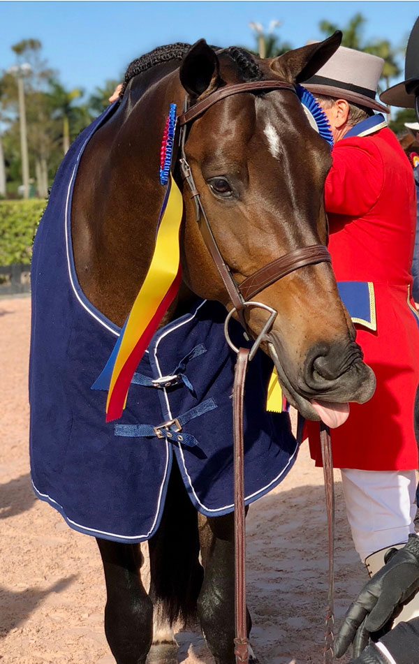 Lindsay Maxwell's Technicolor Champion Amateur Owner Hunter 2017 Wellington