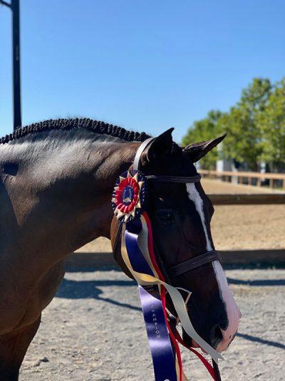 Sloan Lindemann Barnett's Spectacular Large Junior Hunter 16-17 Champion 2019 Sonoma Horse Park
