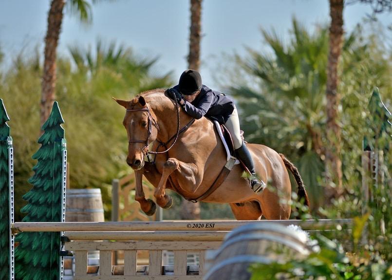 Gina Ross and Tealeo AO Hunter 36 & Over 2020 Desert Circuit