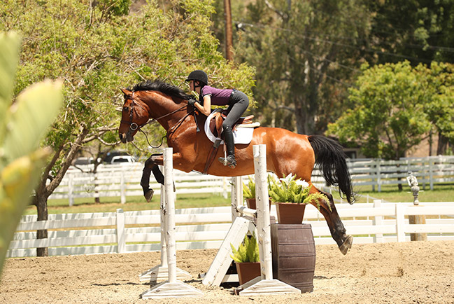 Vivienne Wood and Way Out West 2020 Brookway Stables Lessons at Home